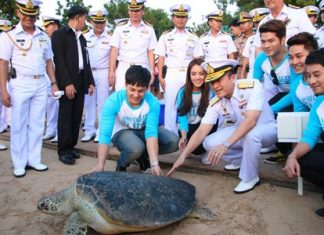 Among the 989 green and hawksbill turtles set free was a 15-year-old breeder.