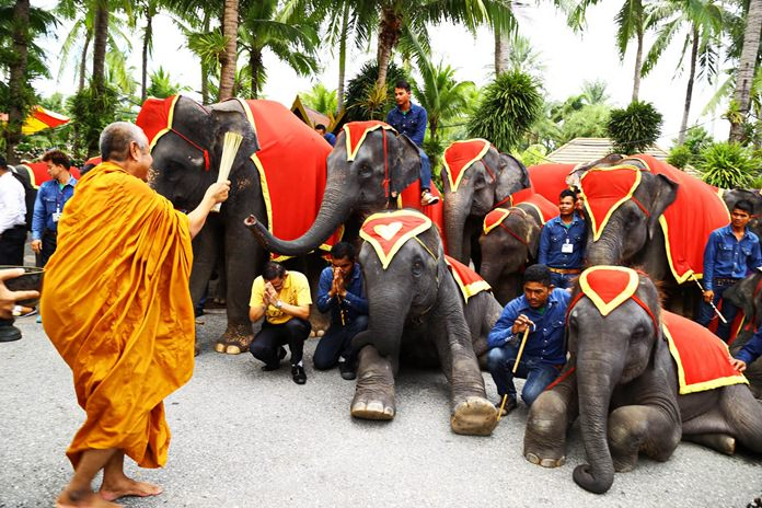 A revered monk blesses the elephants at Nong Nooch Tropical Garden.