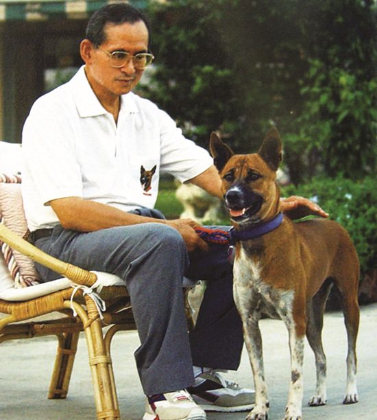 His Majesty the King sits with his beloved adopted stray dog Khun Thongdaeng in Bangkok Monday, December 2, 2002.