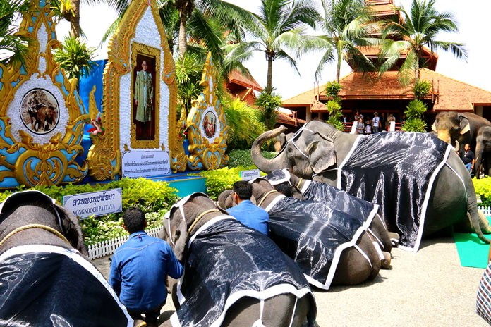 Nong Nooch Tropical Garden paid tribute to HM the late King with an elephant merit-making ceremony.