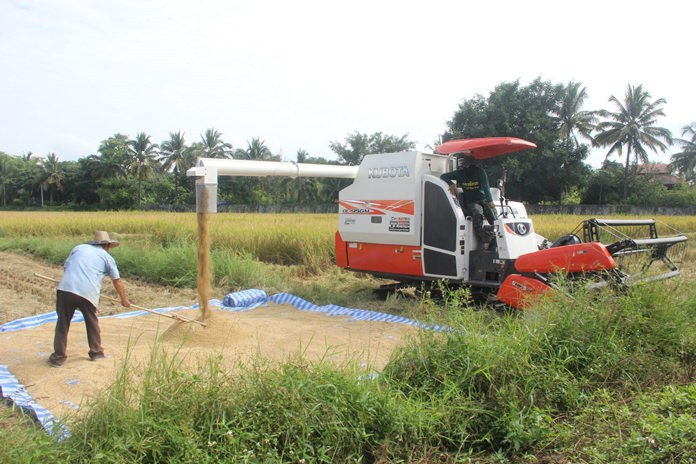 Farmers receive help from the Agriculture Department with the use of combine harvesters to harvest rice in the Chiang Mai, Lamphun, Chiang Rai and Mae Hong Son.