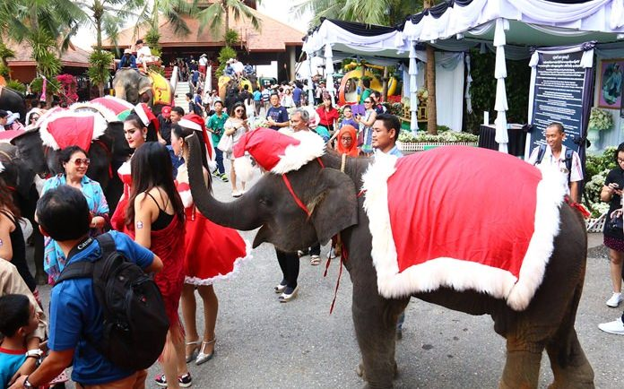 Elephants at Nong Nooch Tropical Gardens are dressed for the occasion.