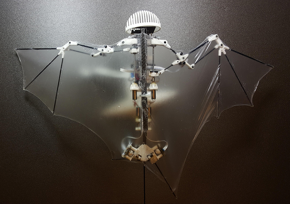 Because it mimics the unique and more flexible way bats fly, this new robot prototype can do a better and safer job getting into disaster sites and scoping out construction zones than those bulky drones with spinning rotors. (Alireza Ramezani/University of Illinois via AP)