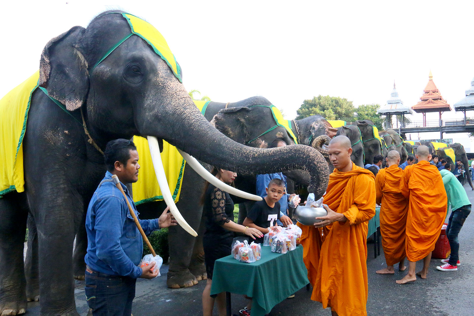 National Elephant Day was celebrated with the pachyderms offering alms to monks...