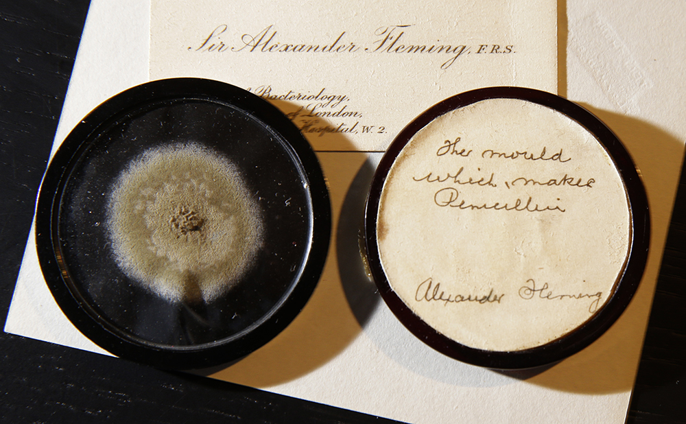 A capsule of original penicillin mold from which Alexander Fleming made the drug known as penicillin on view at Bonham's auction house in London. (AP Photo/Alastair Grant)