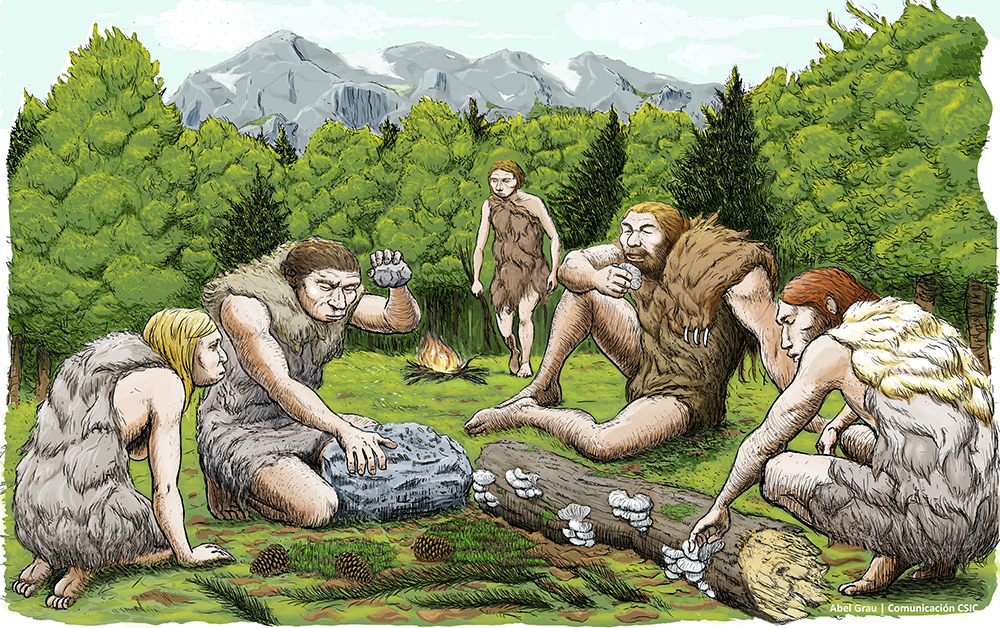 This drawing provided by Abel Grau Guerrero shows mostly vegetarian Spanish Neanderthals munching on mushrooms, pine nuts and moss. (Abel Grau Guerrero via AP)