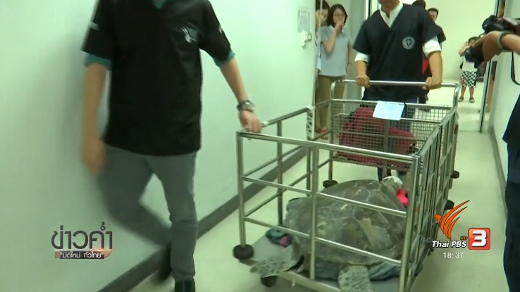 Thailand News 07-03-17 3 PBS Green sea turtle safe after surgery to remove over 900 coins from its stomach 2