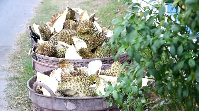 Pattaya Environment workers said they are collecting about two tons of fruity leftovers a day.