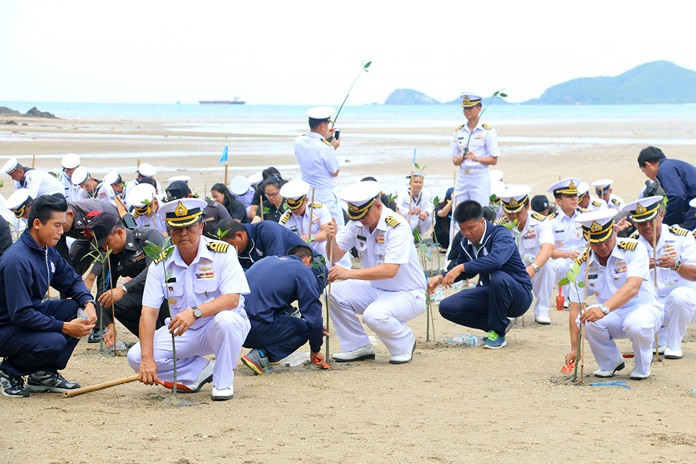 Naval officers, sailors, students and members of the public plant mangrove trees to honor HM Queen Sirikit on her birthday.