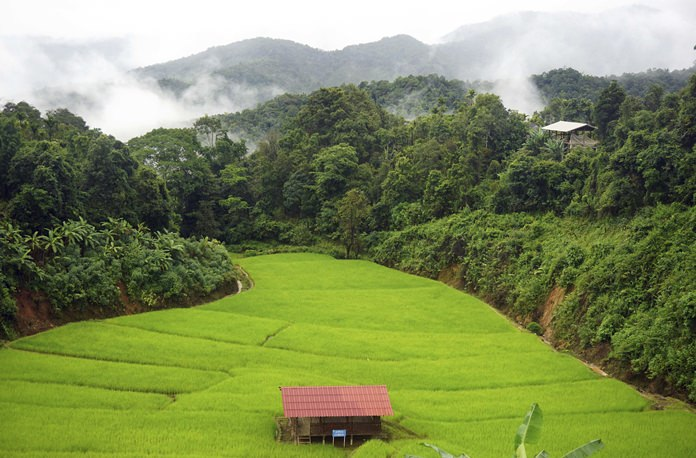In this Sunday Aug. 20, 2017, photo, bright green rice fields sit in the hills of Huay Hom, a misty valley in the northern province of Mae Sariang, Thailand. (AP Photo/Denis Gray)