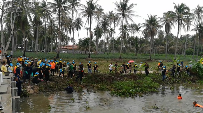 Nong Plalai residents volunteered to clear the Nong Pladuk weir of water hyacinth when the plants clogged drainage pipes after heavy rain.