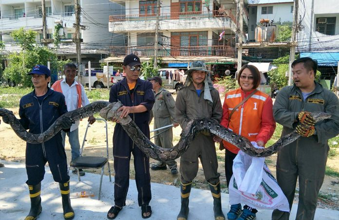 A giant python wanting in on the Children's Day fun scared kids and their parents at a central Pattaya restaurant.