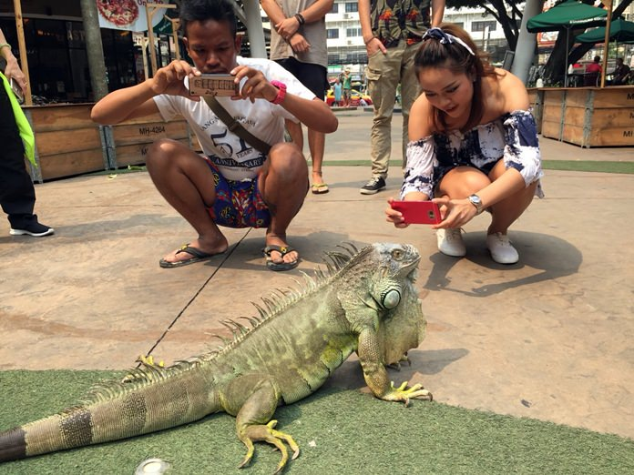 Jaow Toong Gnuen, an iguana who once called Pattaya's Avenue galleria home, still likes to hang out and pose for photos there.