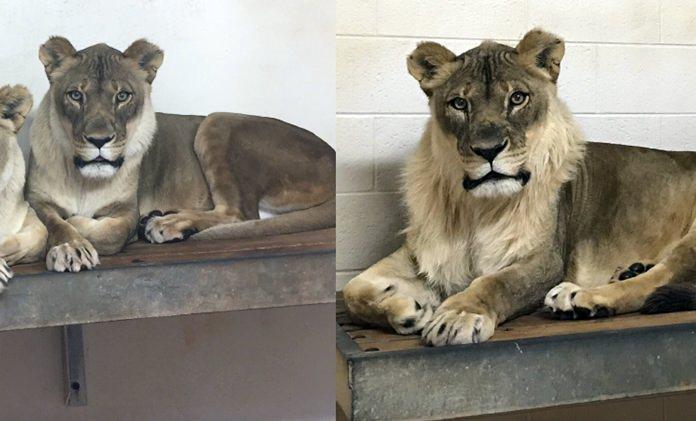 (Amanda Sorenson/Oklahoma City Zoo via AP)
