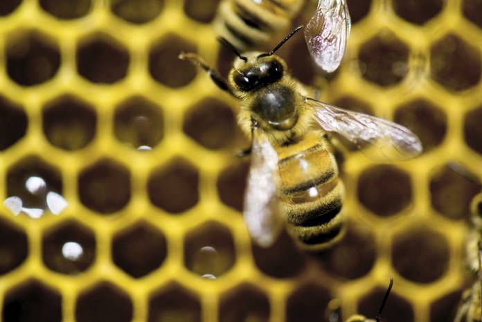 The European Union has made a key breakthrough to completely ban pesticides that harm bees and their crop pollination. The 28 member states got a large majority backing the ban on the three prevalent neonicotinoid pesticides which will take effect at the end of the year. (AP Photo/Andy Duback, File)
