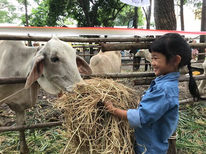 At Jittapawan College, 86 cows and buffalos were spared the slaughterhouse in HM the Queen's name and donated to poor farmers in Chonburi.