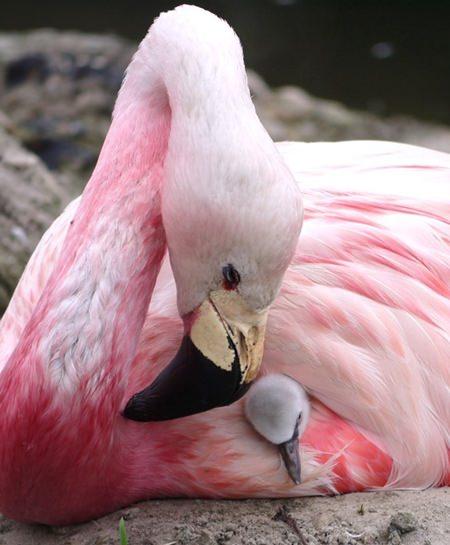 (Wildfowl & Wetlands Trust via AP)