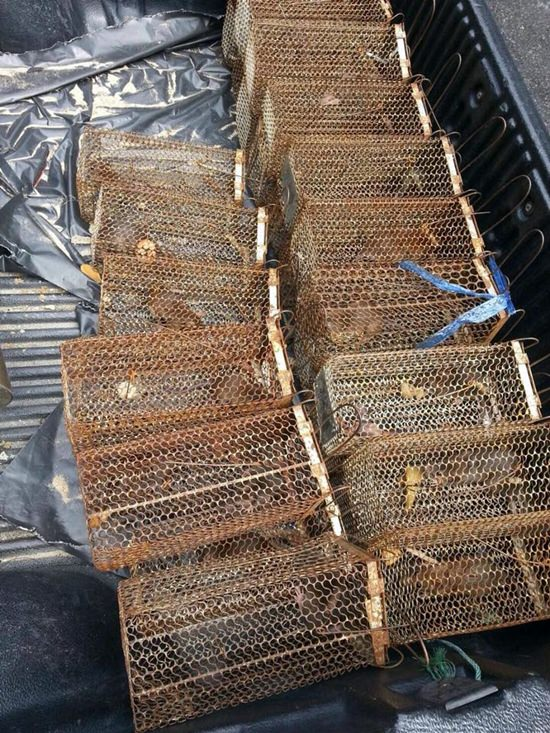 Pattaya health officials captured 27 rats on Pattaya Beach in their latest effort to make the shoreline rodent-free.