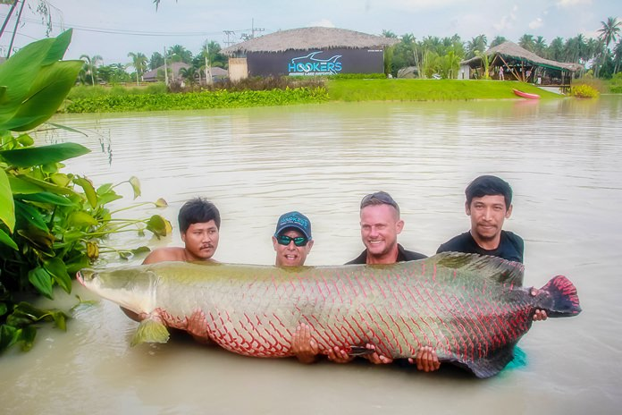 At the auspicious moment Jon Jarrow and his team carried and released this enormous 2.5 meter, 150 kg Arapaima into Hooker's Fishing Lake.