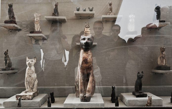 Cat statues on display, at an ancient necropolis near Egypt's famed pyramids in Saqqara, Giza, Egypt, Saturday, Nov. 10, 2018. A top Egyptian antiquities official says local archaeologists have discovered seven Pharaonic Age tombs near the capital Cairo containing dozens of cat mummies along with wooden statues depicting other animals. (AP Photo/Nariman El-Mofty)