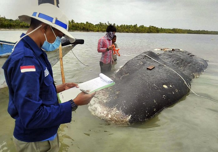 Researchers examine the carcass of a beached whale at Wakatobi National Park in Southeast Sulawesi, Indonesia. (Muhammad Irpan Sejati Tassakka, AKKP Wakatobi via AP)