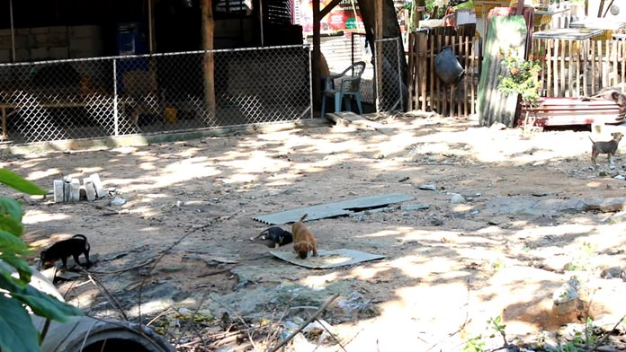 Wat Boonsamphan is offering 1,000-baht rewards for anyone who can identify the people dumping unwanted dogs and cats at the temple.