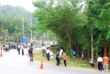 Pattaya Parks Department staff and volunteers cut back or removed about 200 trees along Pratamnak Road.