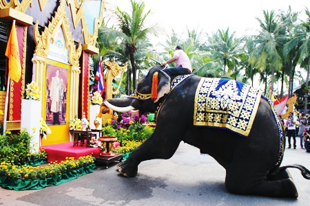 Plai Bird the elephant bows down to present a flower garland to a portrait of HM the King at Nong Nooch Tropical Garden.