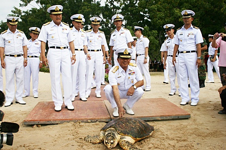 The Royal Thai Navy releases 984 turtles to mark the beginning of HM the King's 84th year.