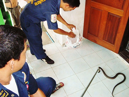 Animal rescue officers remove the uninvited guest from Kwanjai's home.