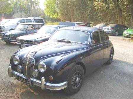 Jaguar at rest.