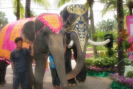 Mahouts bring in a pair of elephants to put on display during the announcement.