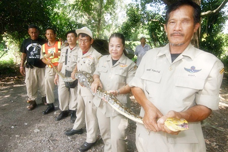 Sattahip Civil Defense Volunteers have managed to capture the snake and will set it free in Khao Lame Poo Chao at Prince Chumphon Camp.