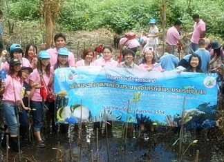 Royal Thai Navy personnel, students and Sattahip-area residents plant trees to honor HM Queen Sirikit on her 79th birthday.