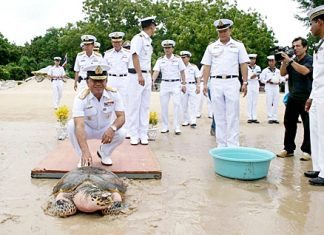 Adm. Narong Thesvikaal, commander of the Royal Thai Fleet, presides over the release of a female green turtle it has nursed for 12 years.