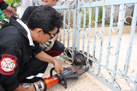 Rescue workers try to calm down Ai Dum as they use the Jaws of Life to free the mutt.