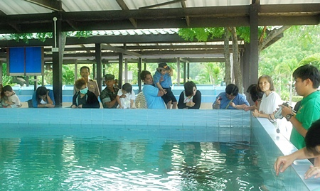 Royal Thai Navy officials helped flood evacuees pass the time with an informational visit to the Navy's Sea Turtle Conservation Center in Sattahip.