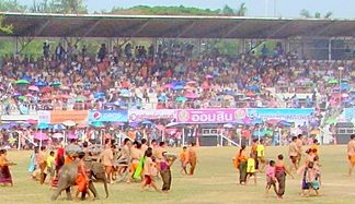 There is always elephants and pageantry at the annual Surin Elephant Round Up.