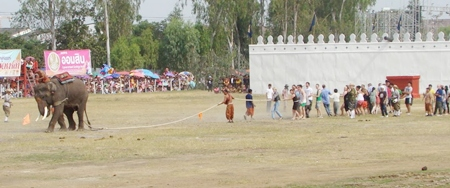 One of the many shows on offer was a tug of war between and elephant and humans. The elephant won, of course.