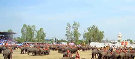 About 300 elephants parade before the audience at the end of the Surin Elephant Round Up.