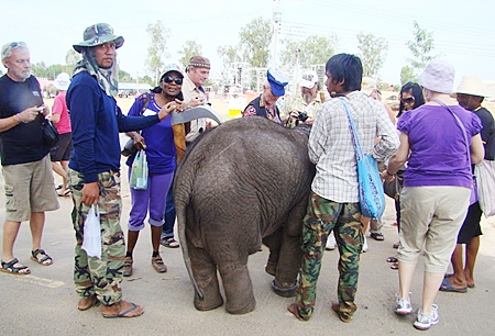 Several PCEC members strolling around after the show take the opportunity to see a baby elephant up close.