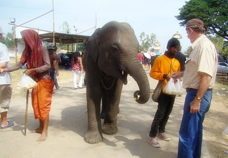 PCEC Member Stuart Saunders offers some food to one of the elephants after the show.