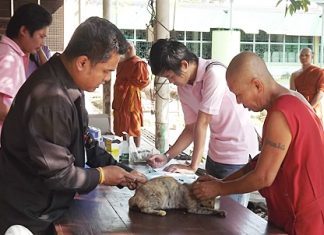 Officials vaccinate a cat against rabies at Jittapawan Temple.