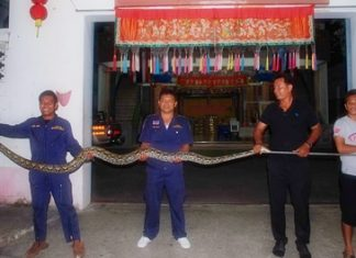 The python measured 4.2 meters long, over 12 centimeters wide and weighed in at a hefty 68 kilograms.