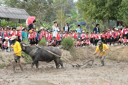 The Royal Thai Navy in Sattahip is creating a buffalo-preservation project to revisit the good old days.
