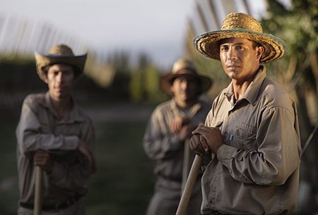 Vineyard workers at Zuccardi Winery, Argentina.