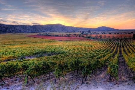 """La Rinconada vineyard, source of """"Las Condes"""" wines."""