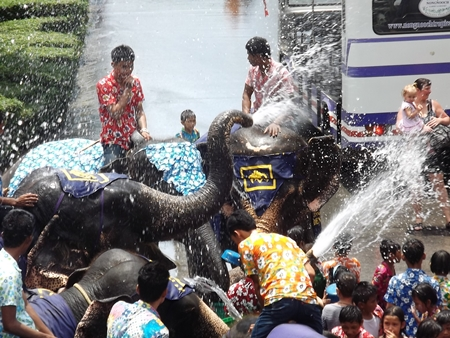 Elephants go wild, spraying water on guests at the Nong Nooch Tropical Gardens.