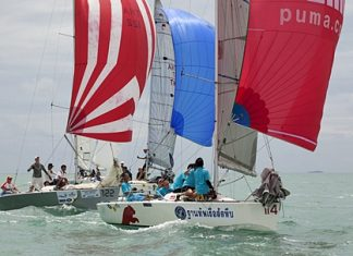 Platus providing the colour, and the competition on Day 2 of the Top of the Gulf Regatta. Photo by Guy Nowell/ Top of the Gulf Regatta.