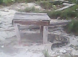 This fuzzy image taken by a cellphone shows one of the crocodiles seen on one of the outer islands.